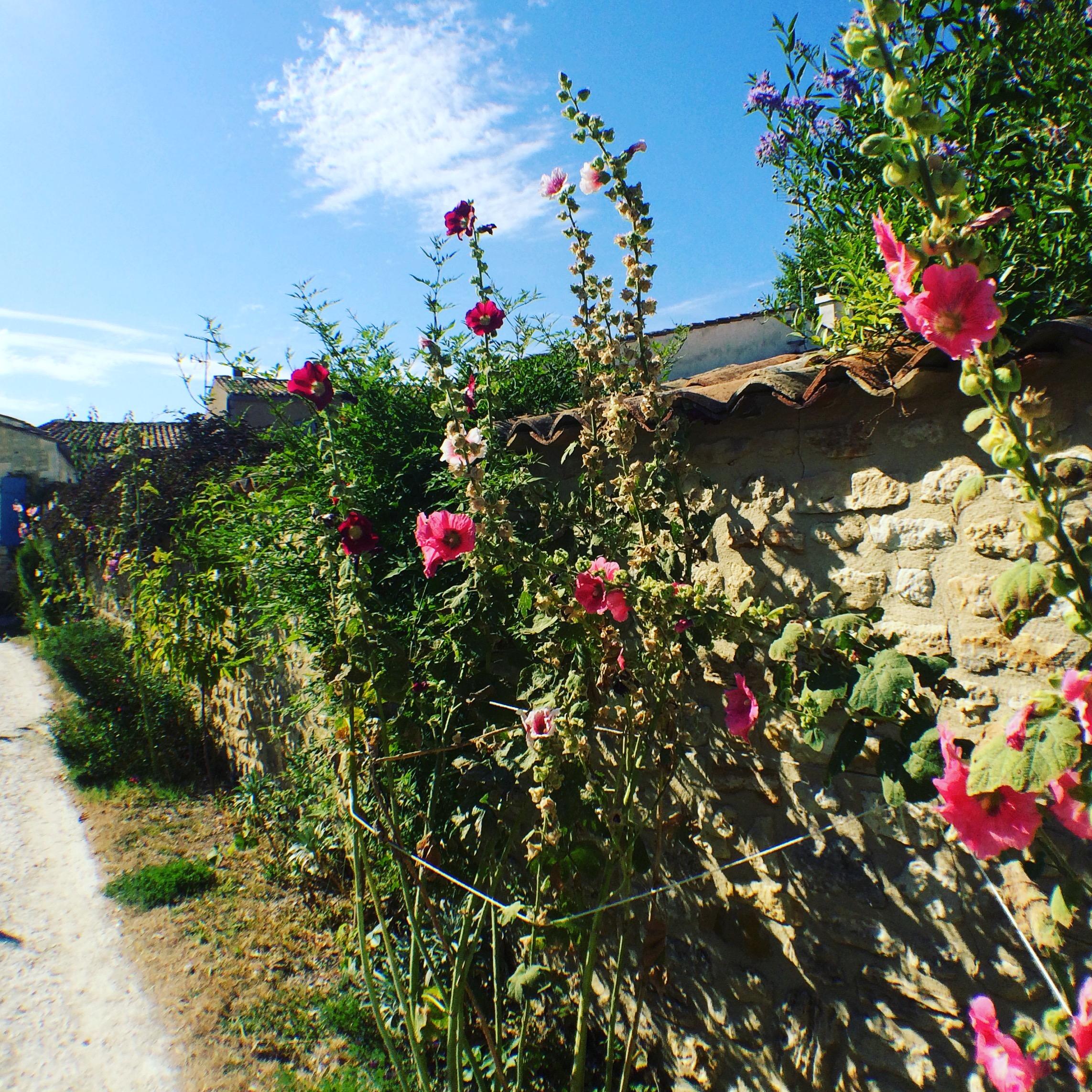 livingincognac-talmont-roses