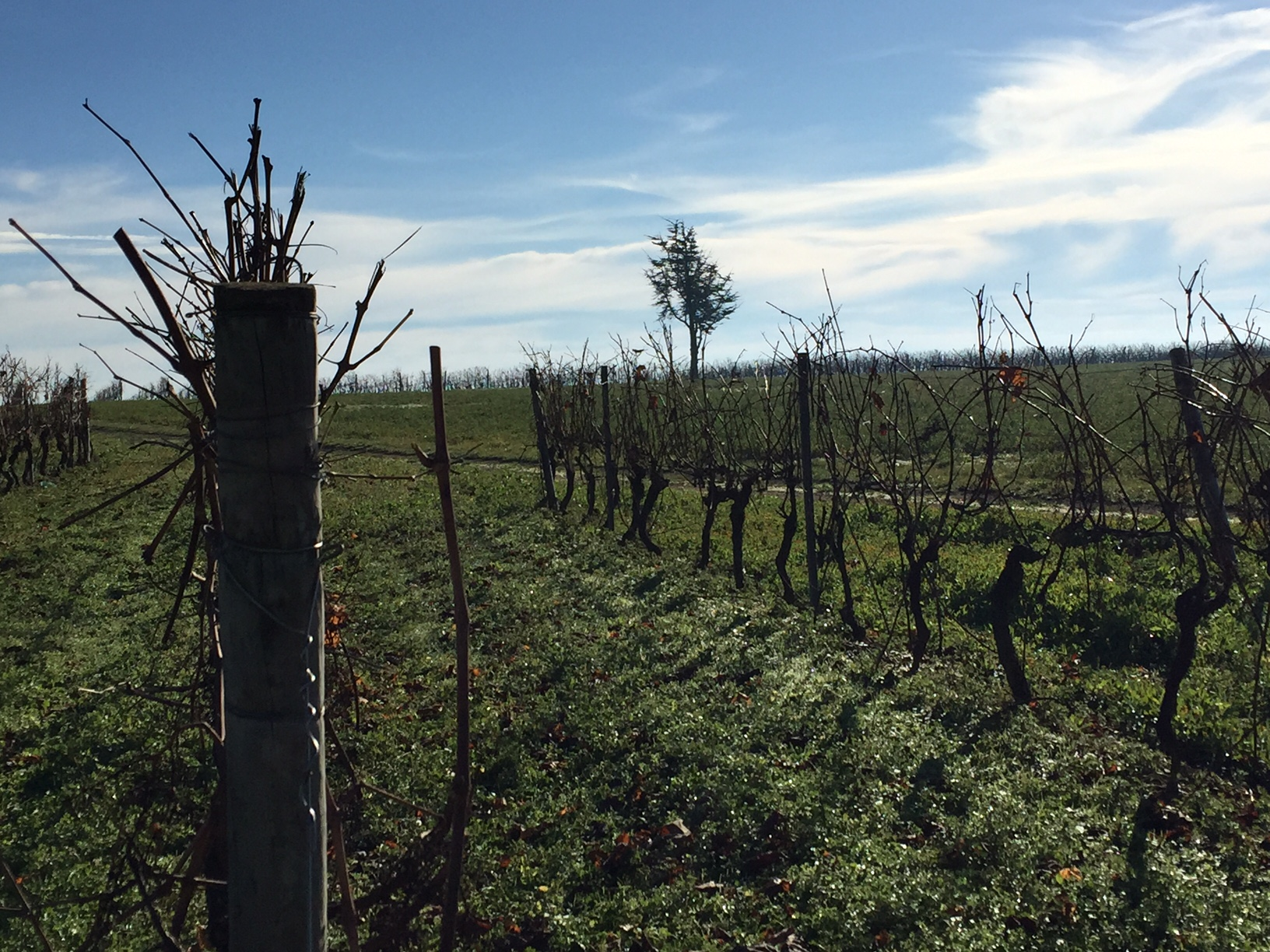 livingincognac - truffieres et vignes