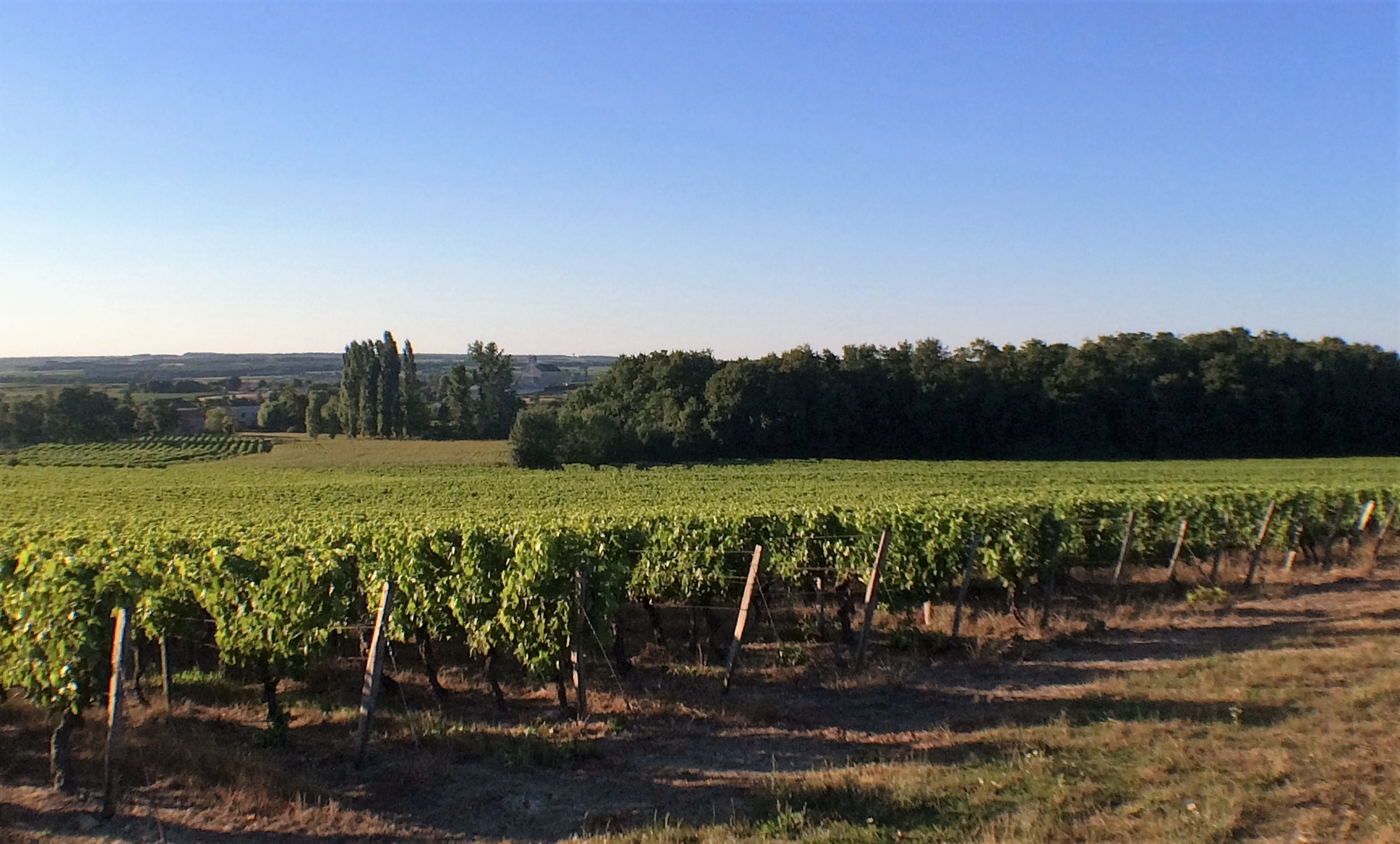 livingincognac-cognacvineyards