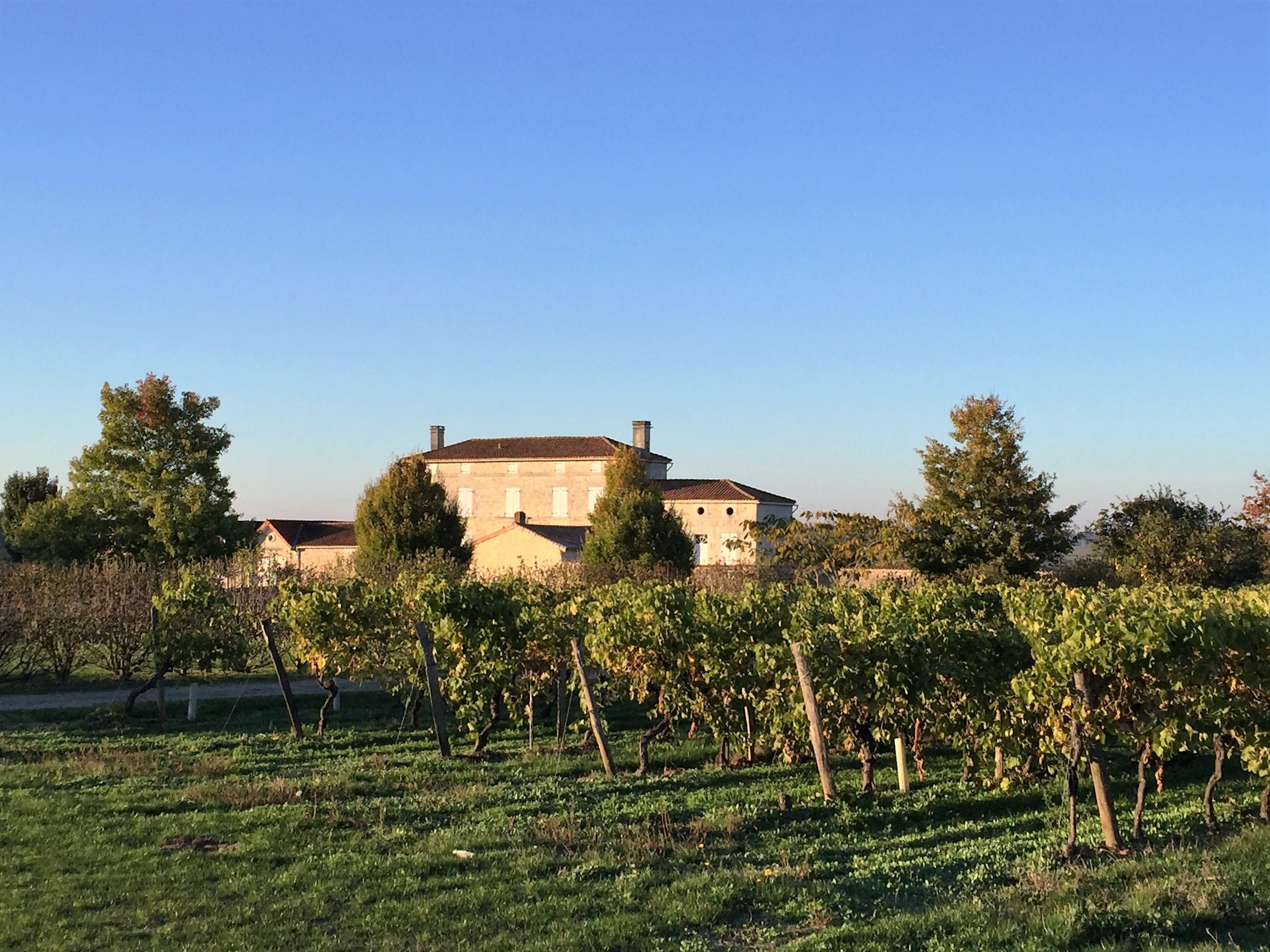 livingincognac-2016-octobre-vignes-moulidars-3