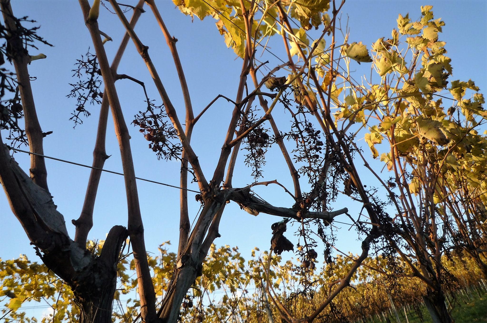 livingincognac 2016 autumn
