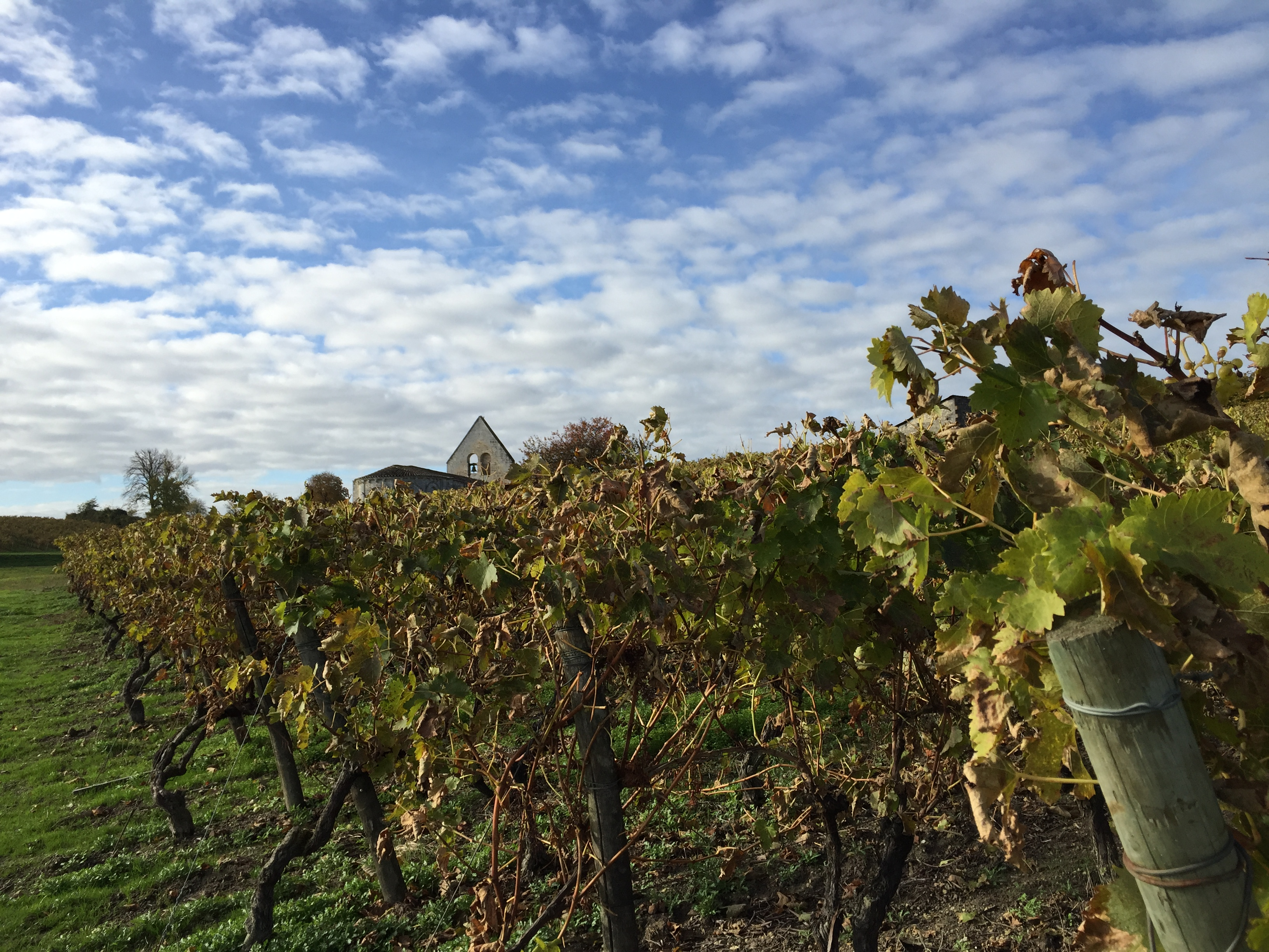livingincognac-2016-autumn-in-vineyard