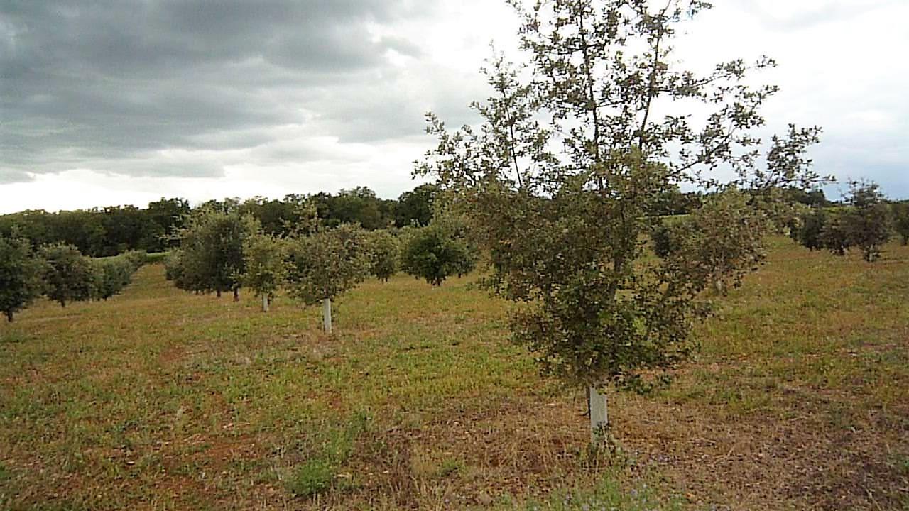 livingincognac truffle
