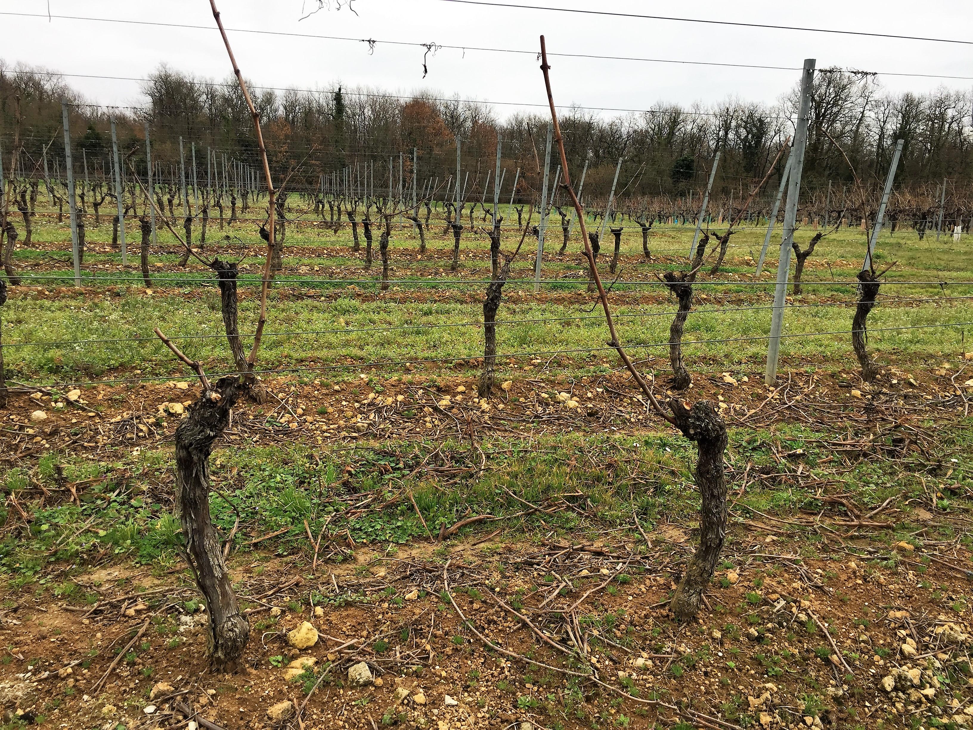 livingincognac pruning