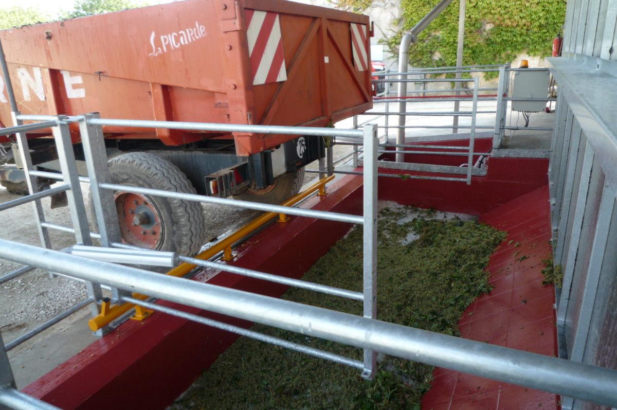 living-in-cognac harvest