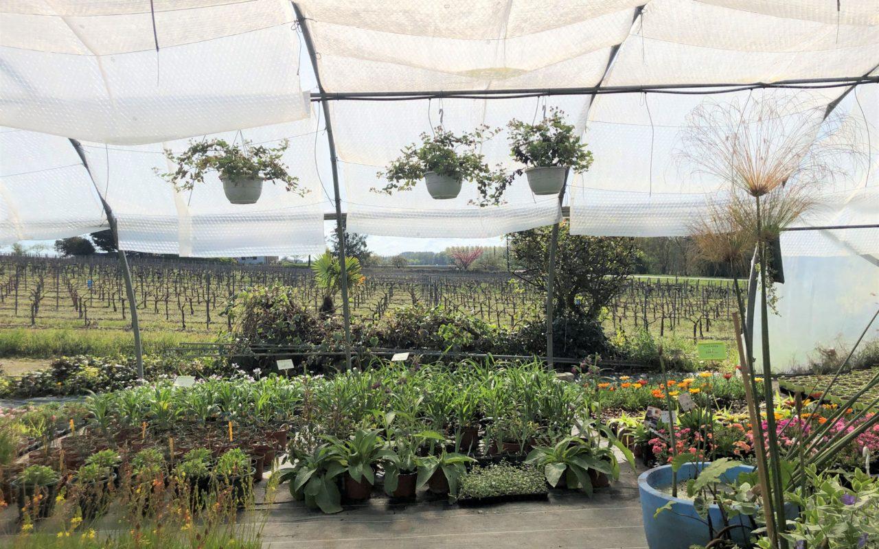 livingincognac secrets de jardin (