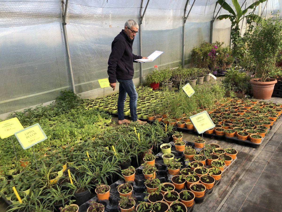 livingincognac secrets de jardin