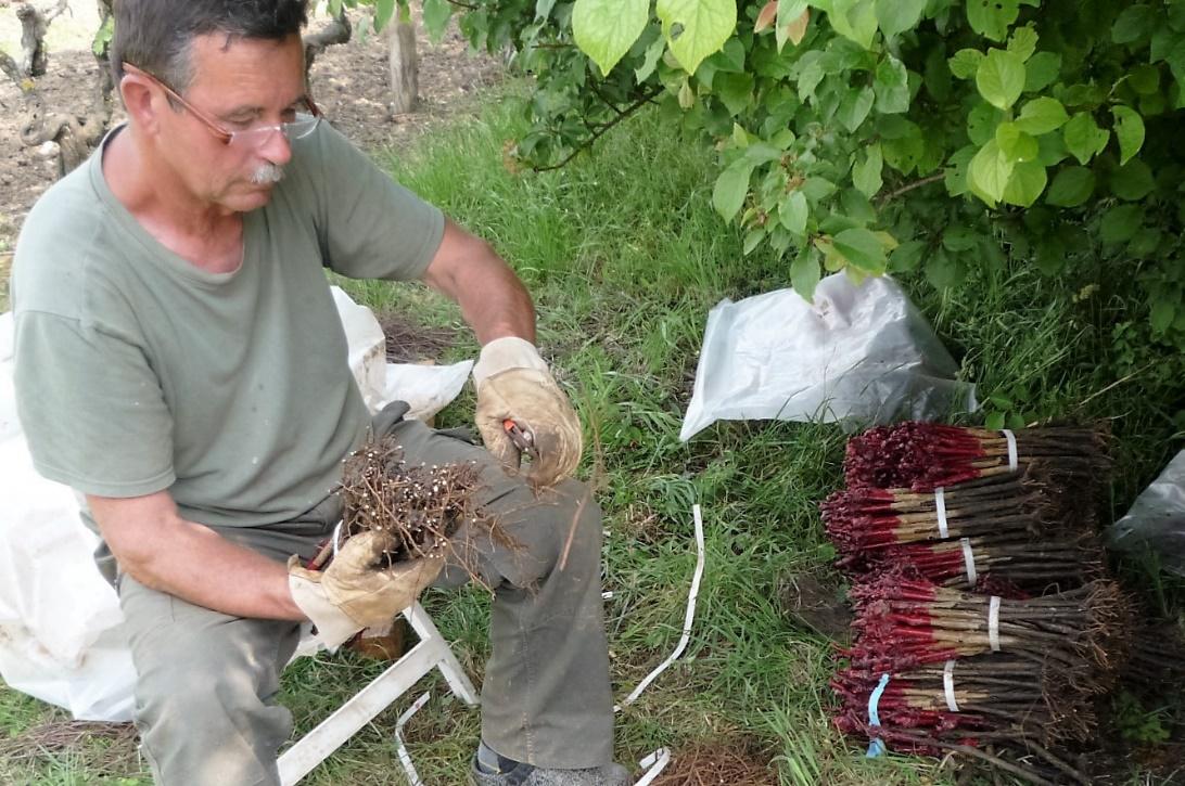 livingincognac 2016 plantation