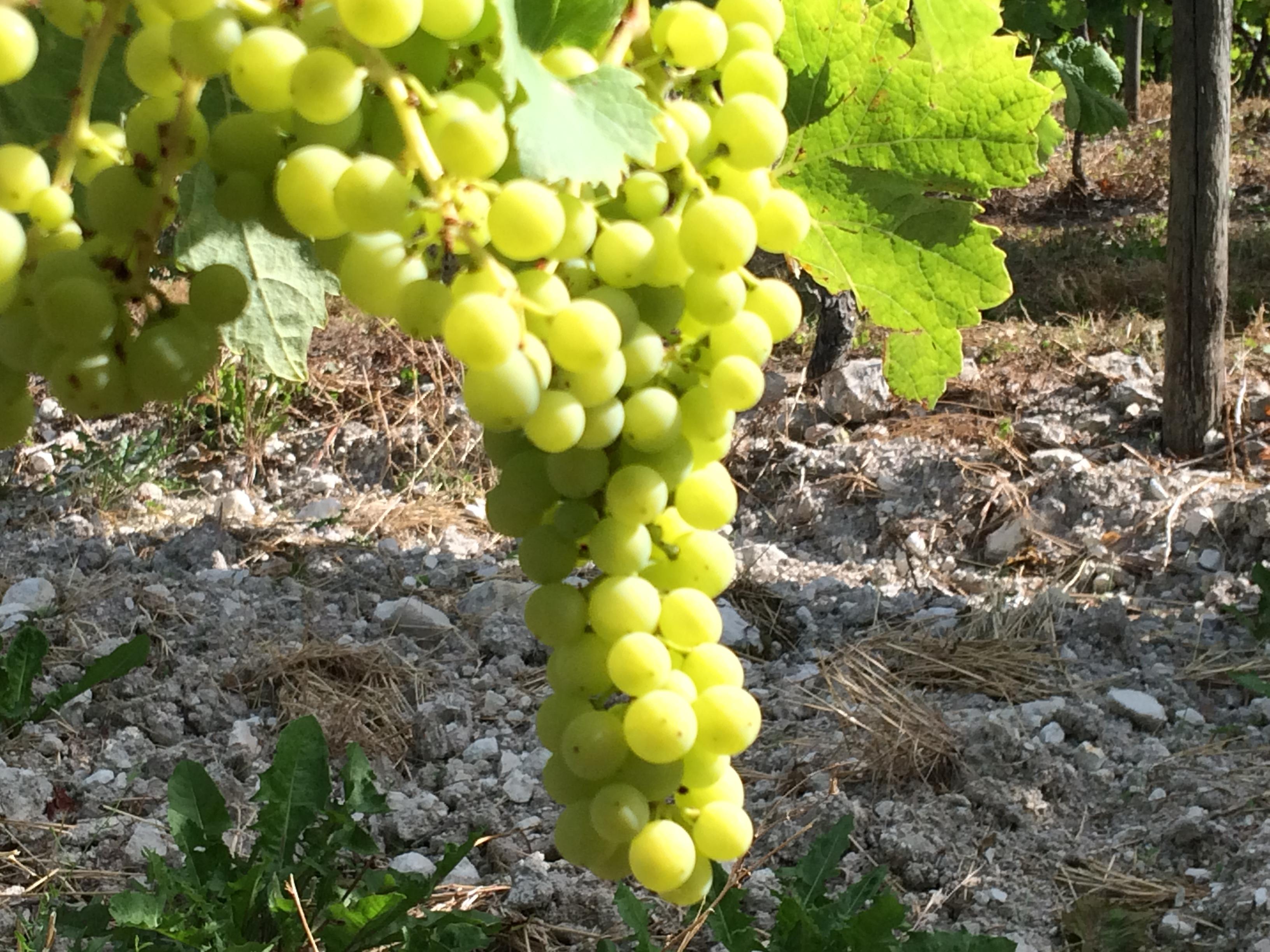 Vignescognac juillet