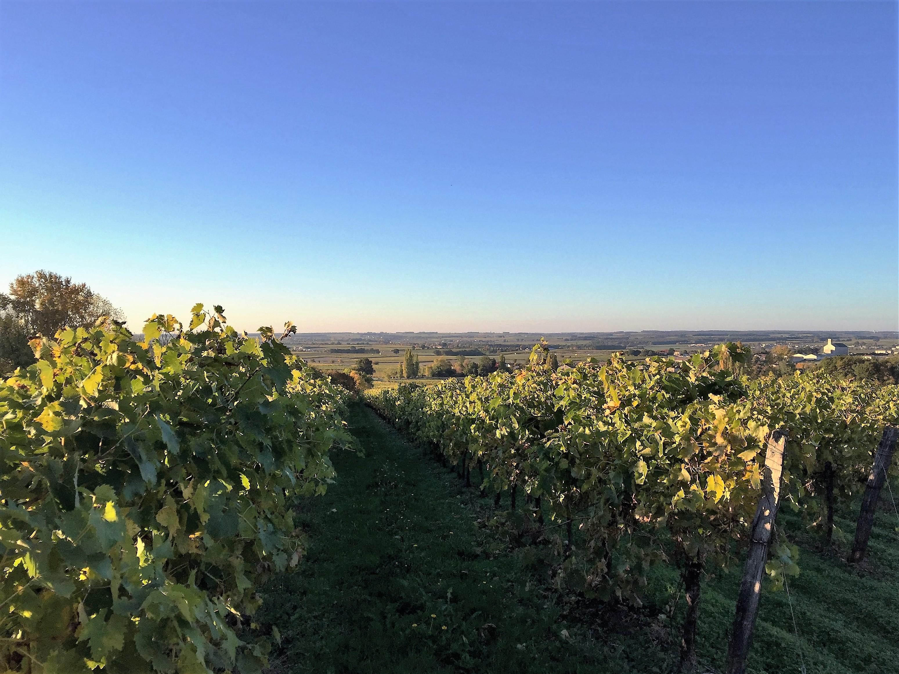 livingincognac-2016-octobre-vignes-moulidars