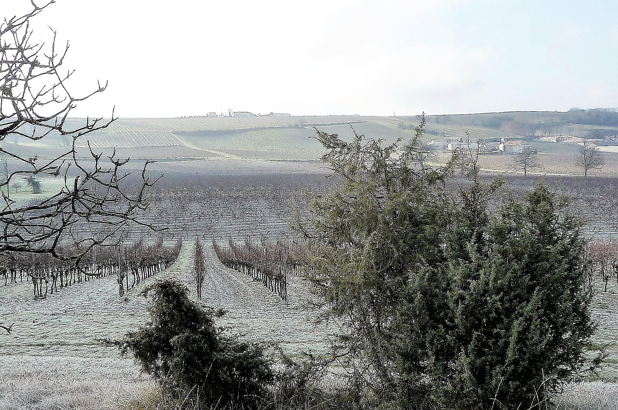 livingincognac - winter