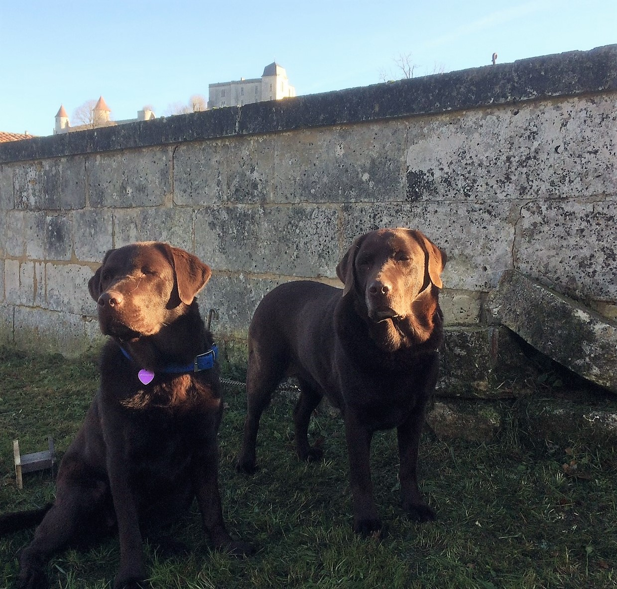 livingincognac - truffle hunting - dogs