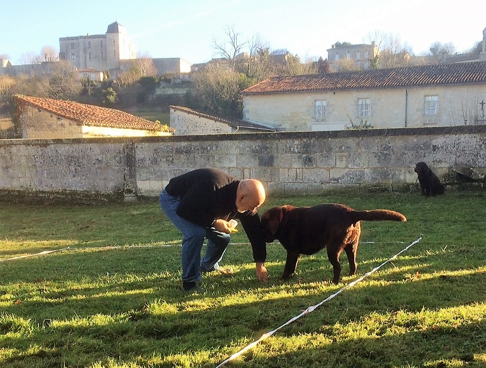 livingincognac - truffles hunting demonstration