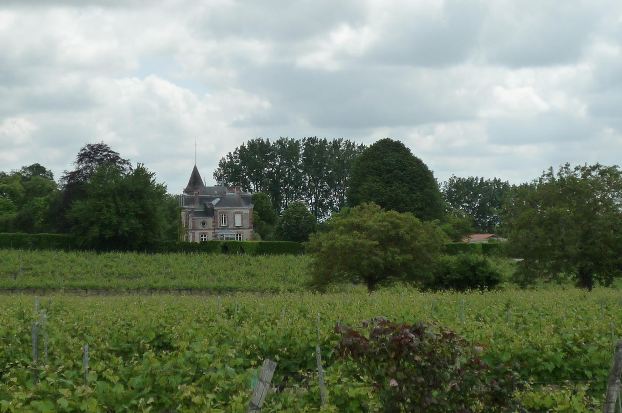 le paysage de cru grande champagne de cognac à Touzac
