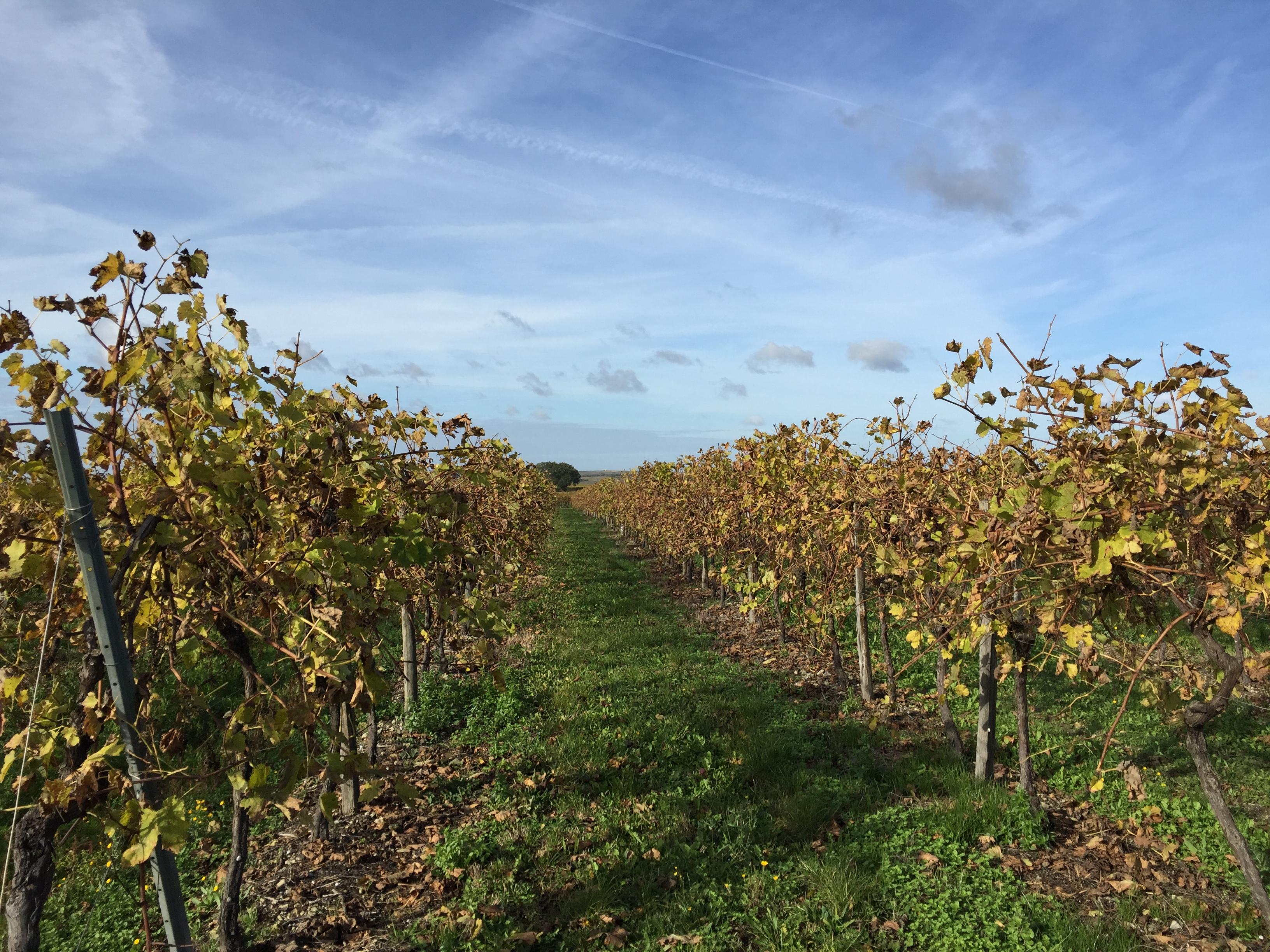l'automne dans le cru borderies de cognac