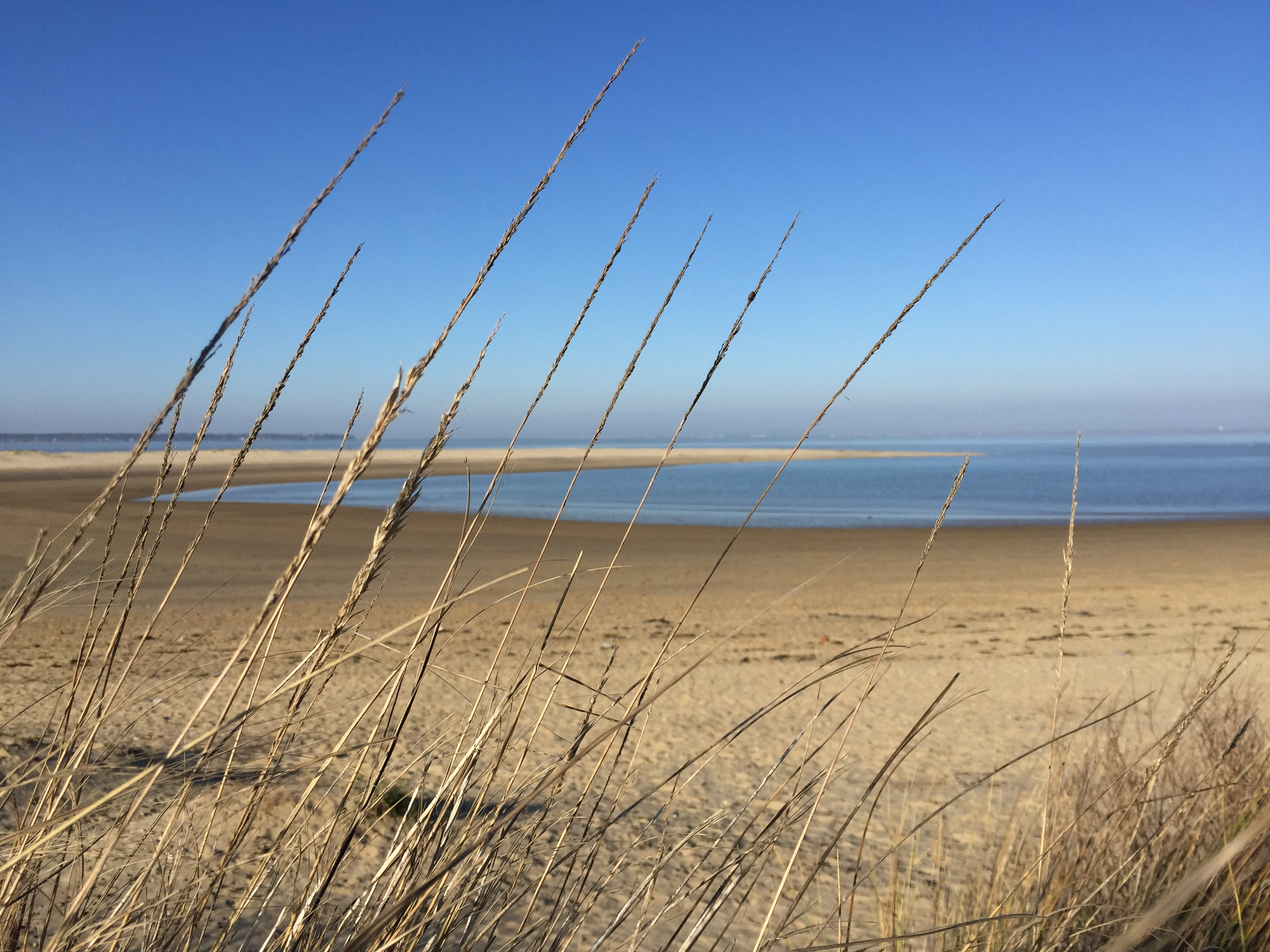 L'Atlantique délimite naturellement le cru des bois ordinaires dans sa partie ouest
