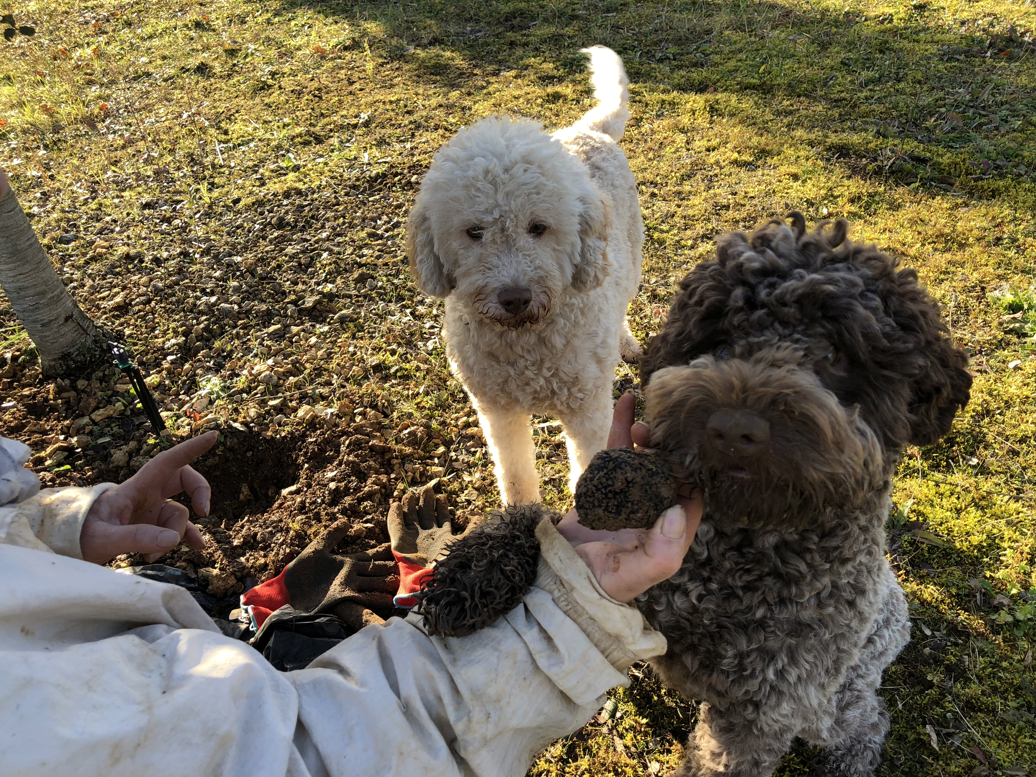livingincognac 2017 truffe truffle