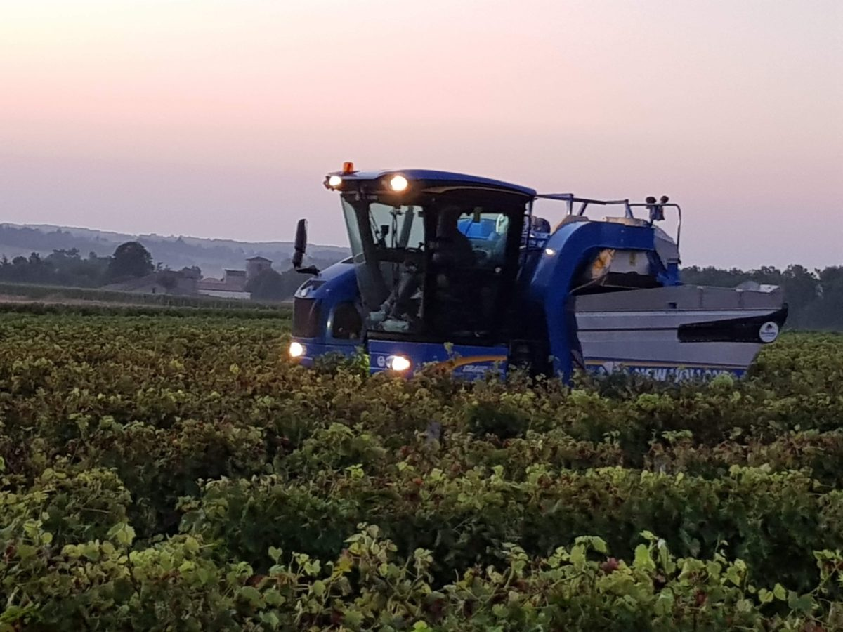 living-in-cognac 2018 harvest