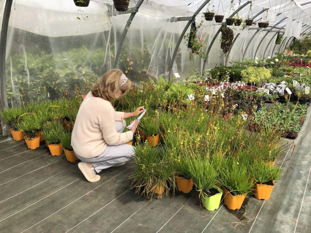 livingincognac serres secrets de jardin