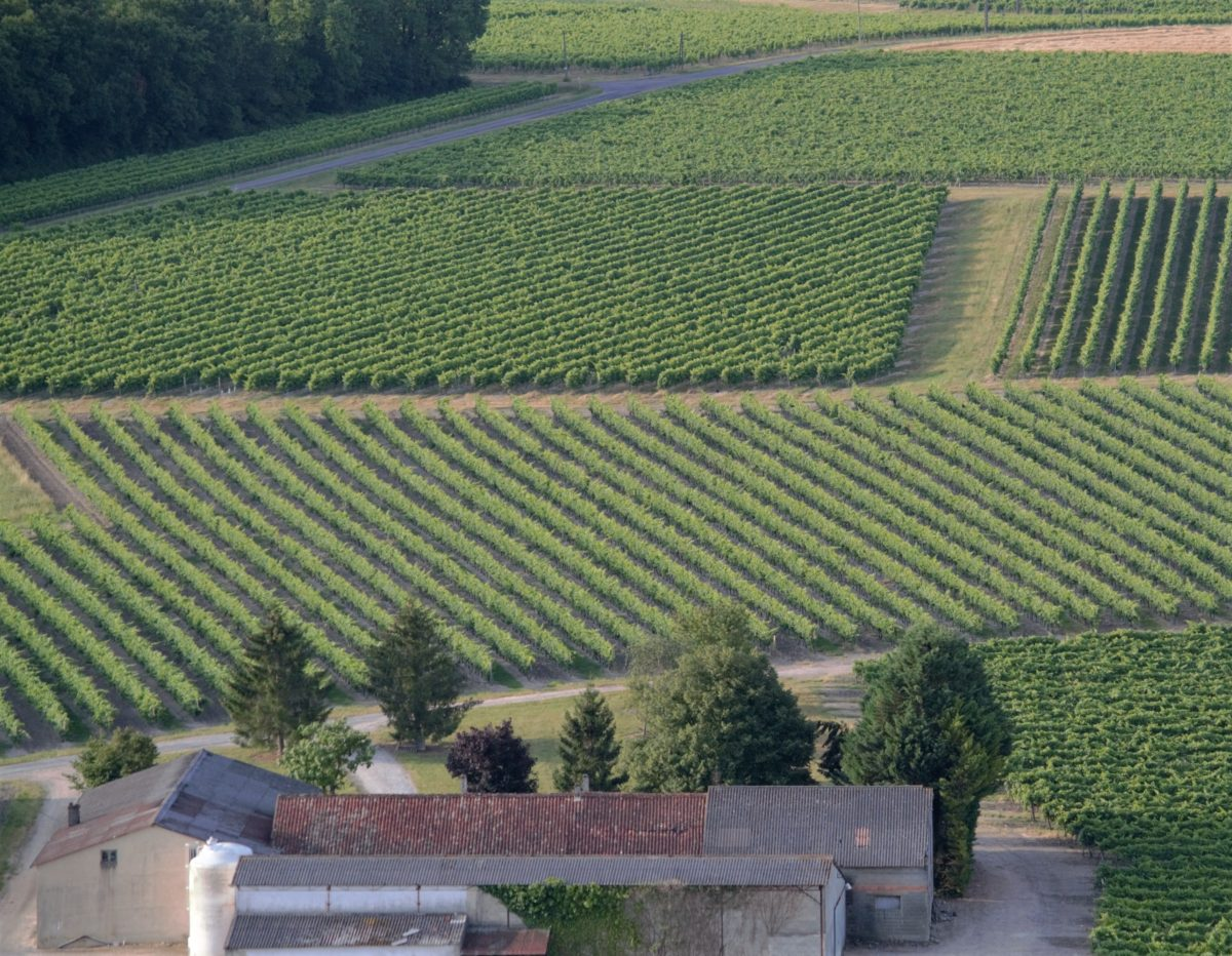 living-in-cognac-montgolfiere-vignes-cognac