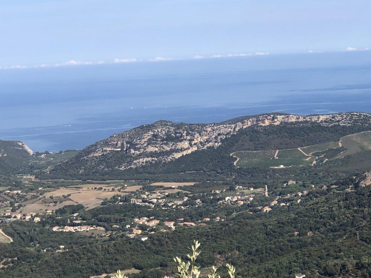 living in cognac dans le vignoble de Patrimonio en Corse