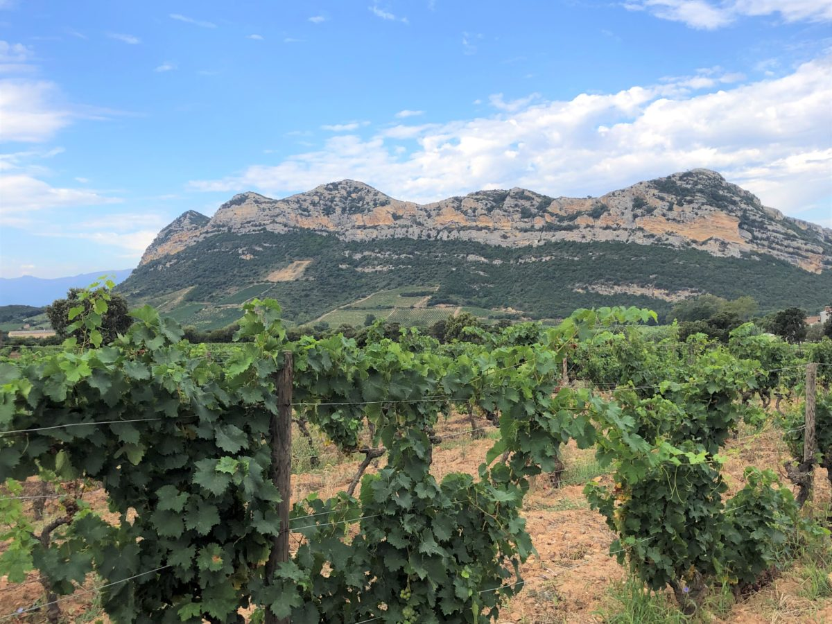 L'AOC Patrimonio en Corse