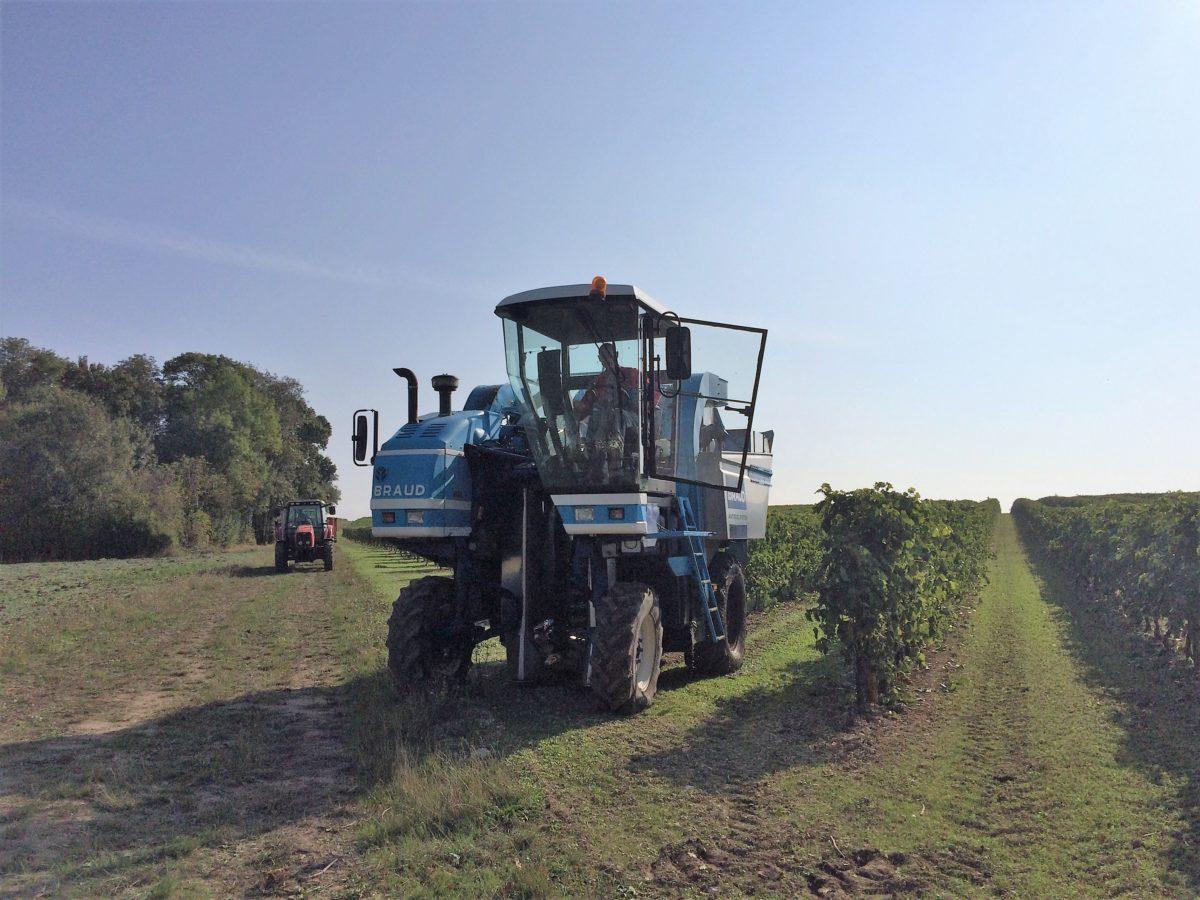 machine à vendanger dans les vignes de cognac