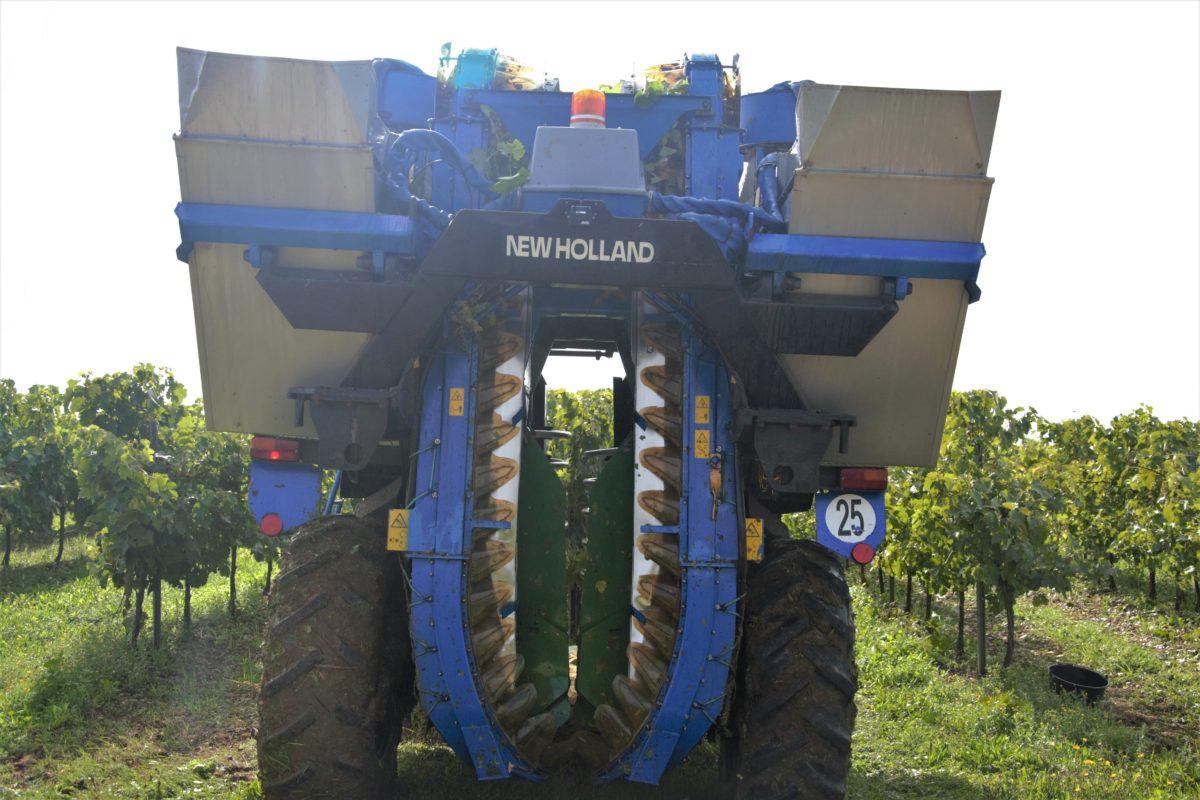 la machine à vendanger dans les vignes de cognac