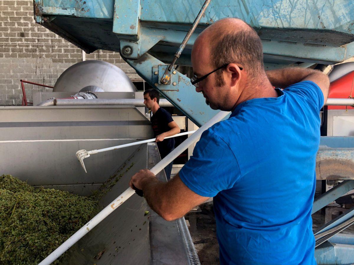 l'équipe aide le raisin à descendre sur la vis