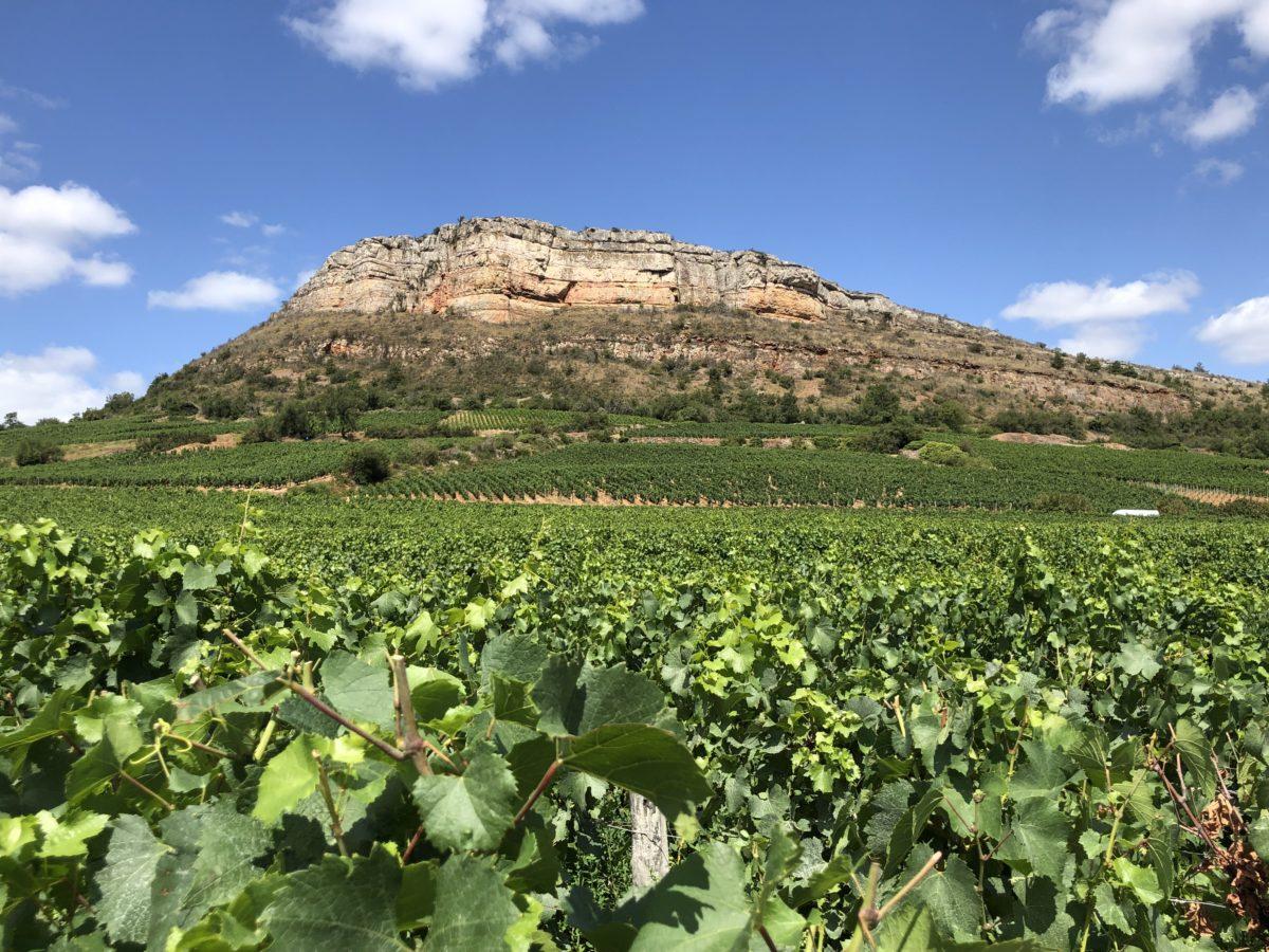 vignes au pied de la roche de Vergisson