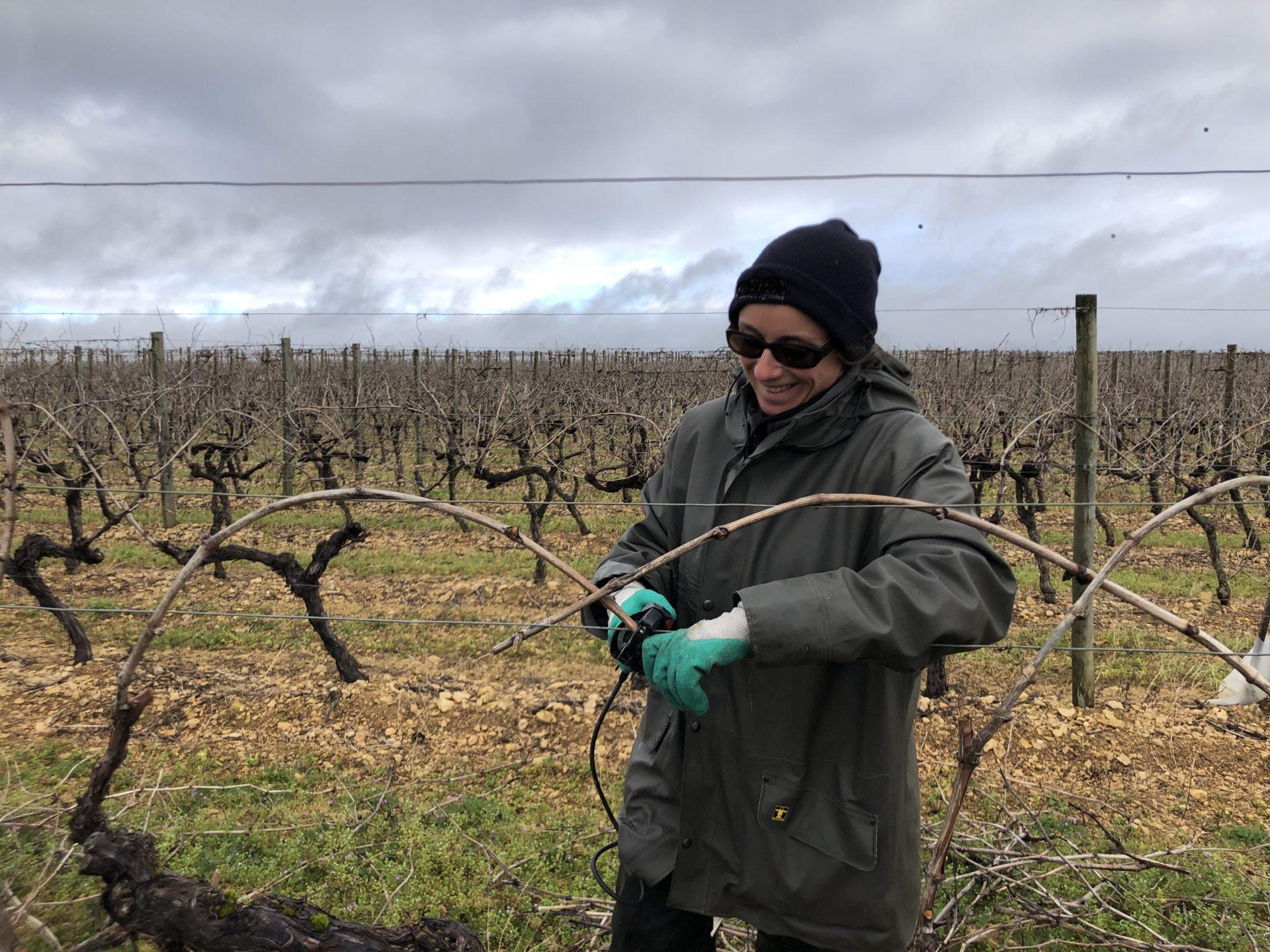 binding the cognac vines