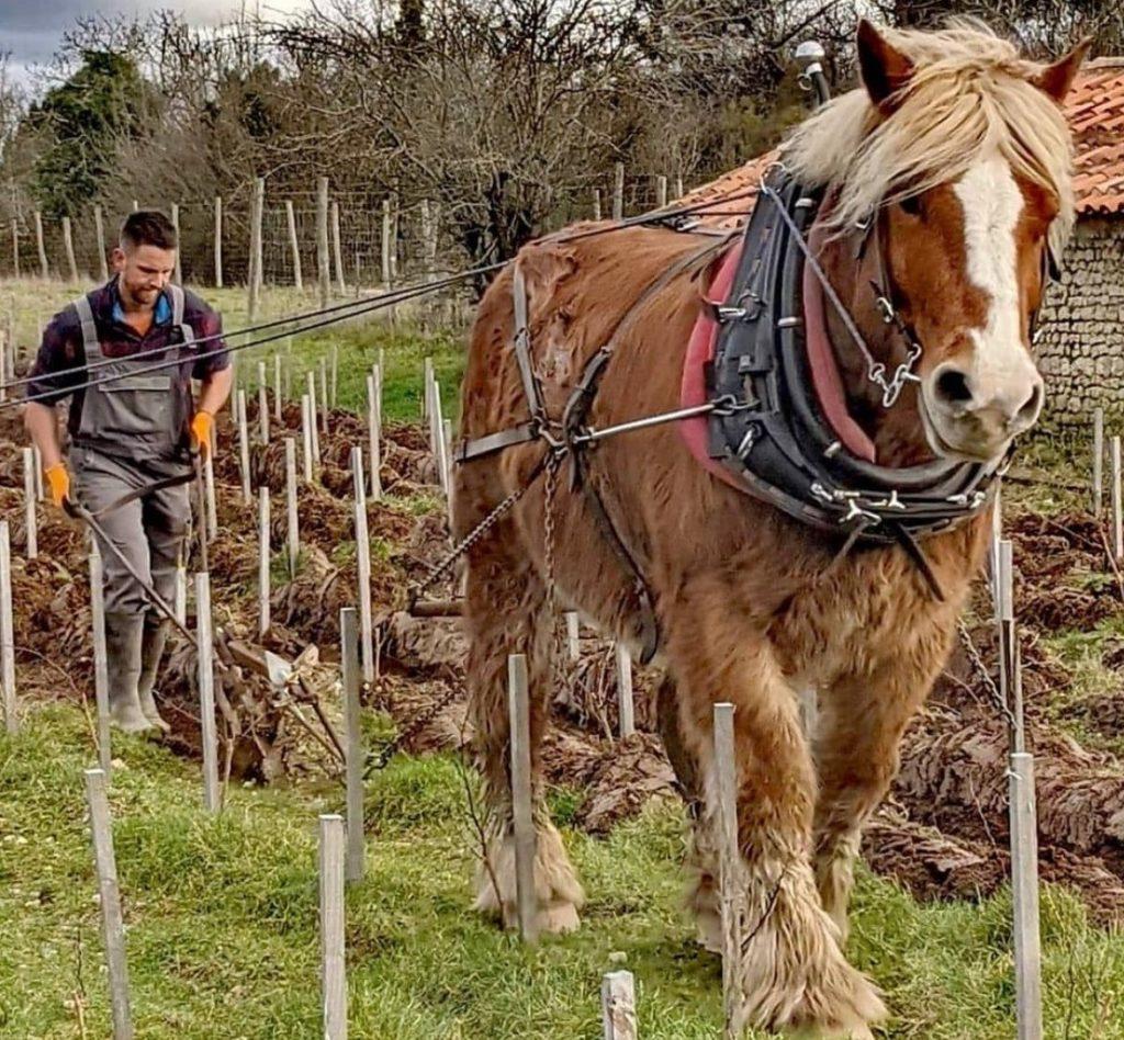 dans es vignes de Rouill'Bouc avec Antoine et Cachou