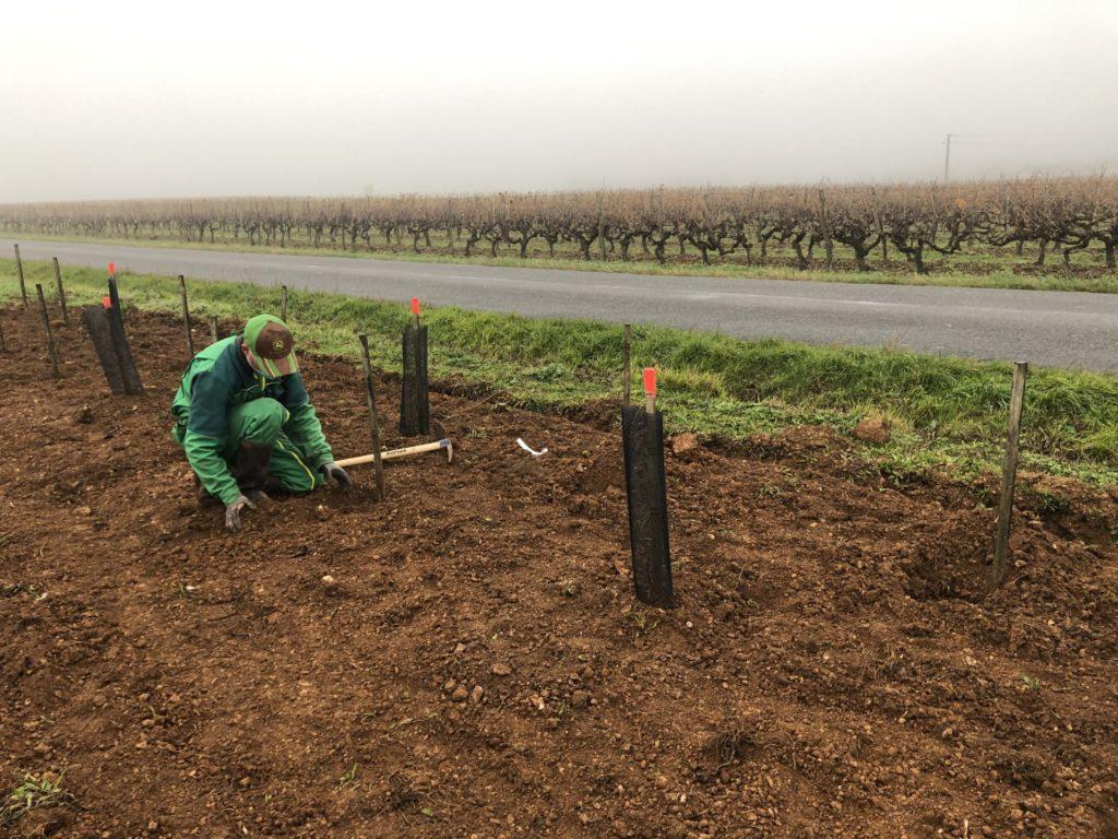 plantation de haies devant les vignes