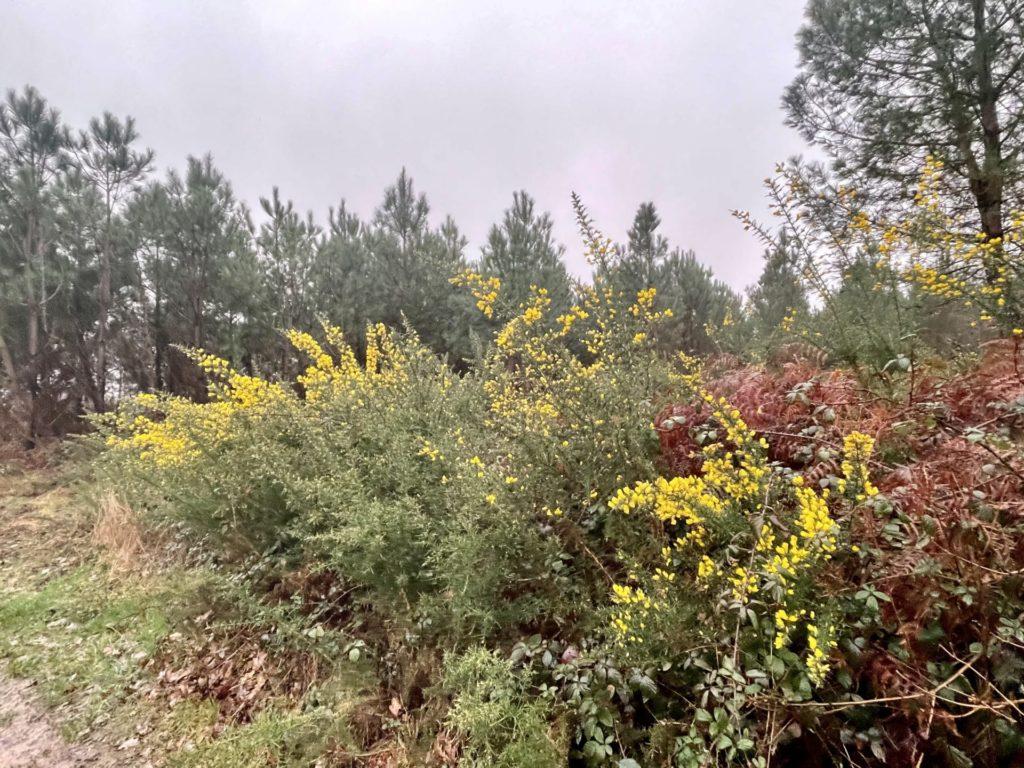 les landes entourant le vignoble de Rouill'Bouc