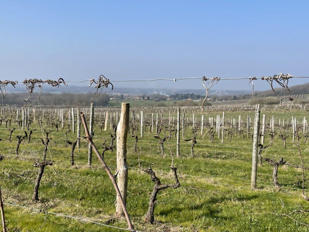 les vignes de saint sornin