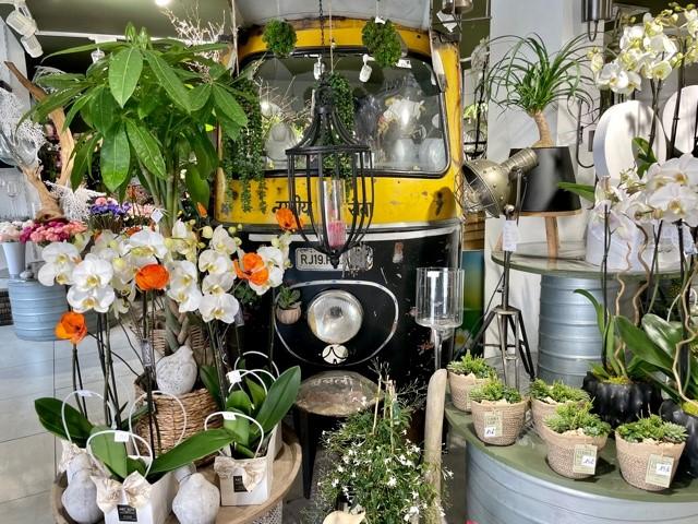 Orchidées chez Art Alia
