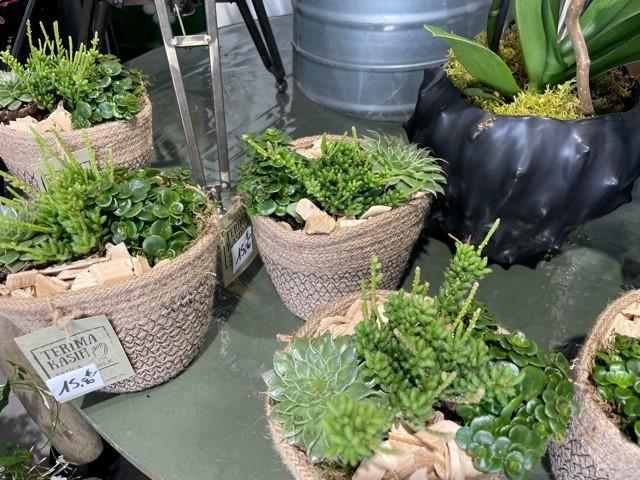 composition de succulentes chez Art Alia