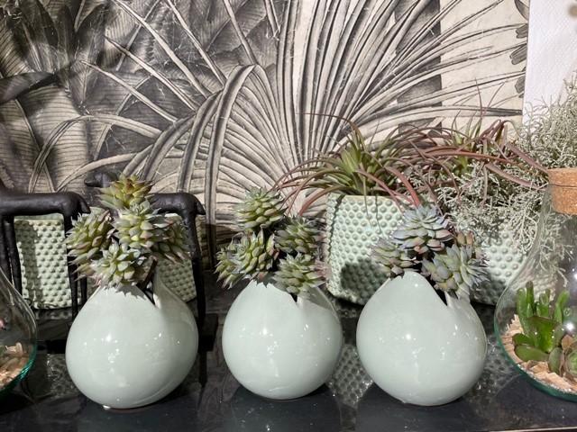 Succulentes en exposition chez Art Alia