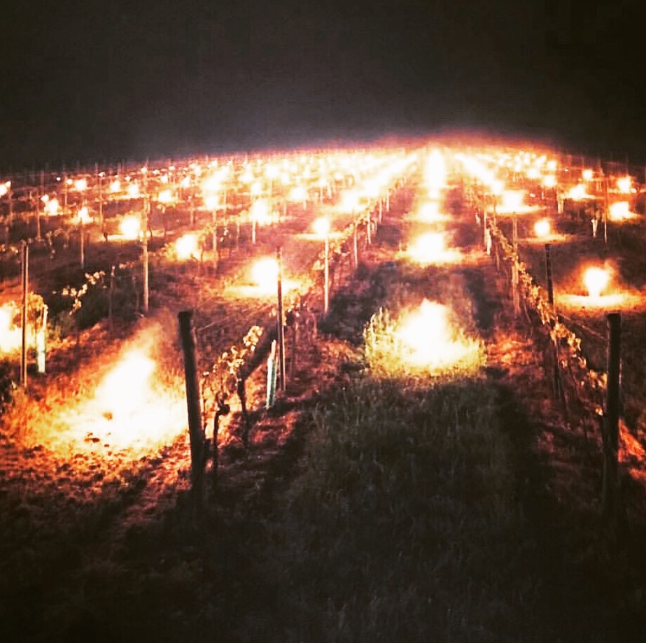 candles and braziers in vines
